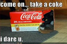 for the #CatLover. Take a #Coke...I dare you. @lorrencotton