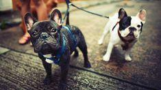 Studie: Darum leben Hundebesitzer länger