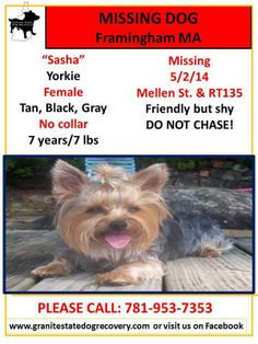 "Missing Female Yorkie Framingham MA 5/2/14 ""Sasha"" is 7 years/7 lbs, Tan, Black, Gray. No collar. Missing near Mellen St. & RT135. Friendly but shy. DO NOT CHASE! Please call with any information: 781-953-7353."