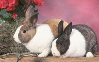 Need help when it comes to grooming your rabbit? Follow these rabbit grooming tips!