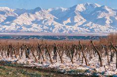 In Vino Viajas : A incrível história do vinho Malbec que superou o ódio entre dois países mas tropeçou no preconceito europeu