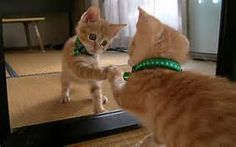 funny cats - Yahoo Image Search Results