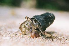 Hermit Crab by Monocot, via Flickr