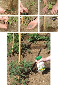 Vegetable gardening has lately become just as popular as going to the grocery store fore produce. Growing Vegetables, Horticulture, Compost, Diy And Crafts, Outdoor Structures, Activities, Flowers, Plants, Semi