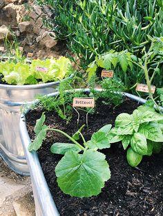 copper stakes in galvanized trough herb garden / sfgirlbybay