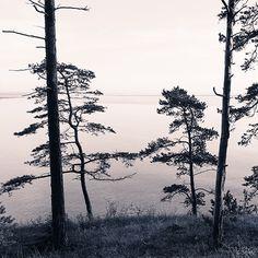 Murales de naturaleza Vivir dentro de un paisaje con árboles y a la orilla del agua con estos murales El aire libre es una creación maravillosa, y fascina a todos. Hay muchas sombras de verde, azul y marrón. Mire a través de la hierba verde o los brotes de bambú y olvidaras las preocupaciones de la vida. Increíble amanecer, junto al mar, el cielo nublado también es bello por si mismo. Cada elemento de la naturaleza es único y difícil de explicar con palabras. La única manera es…