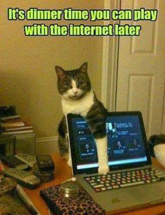 Oh my goodness!  Our tuxedo kitty does this!