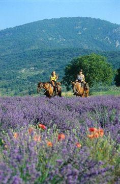 A cheval en Drôme Provençale