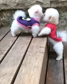 Cute Baby Dogs, Cute Dogs And Puppies, I Love Dogs, Cute Puppy Videos, Funny Animal Videos, Funny Animal Pictures, Super Cute Animals, Cute Funny Animals, Cute Baby Animals