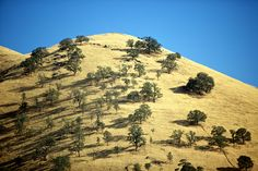 California Landscape, by Tom Coates