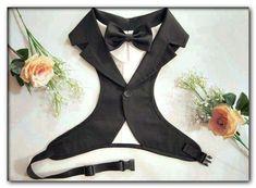 say yes to the dress full episodes dog wedding Dog Wedding Outfits, Dog Wedding Attire, Dog Wedding Dress, Wedding Tuxedos, Wedding Suits, Wedding Ring, On Your Wedding Day, Dream Wedding, White Tuxedo Wedding