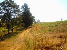 Pelo caminho lindas paisagens...