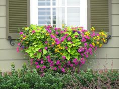 Cool 50+ Awesome Plant Combinations for Window Boxes https://gardenmagz.com/50-awesome-plant-combinations-for-window-boxes/