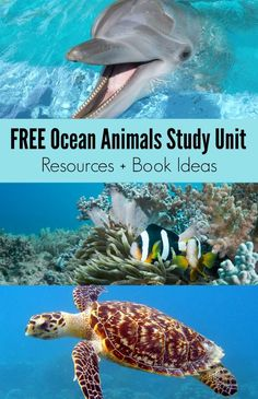 FREE Ocean Animals Study Unit Homeschool and Classroom Resources + Book Ideas