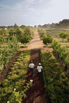 Babylonstoren Farm Hotel, Simondium, South Africa