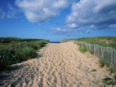 Find information about the off-leash dog parks in Wilmington, NC including Empie Park, Hugh McRae, Ogden Park, Carolina Beach, and Kure Beach Dog Parks.