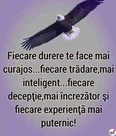 Spiritual Inspiration, Amazing Quotes, Optimism, Funny Texts, Bald Eagle, Animals And Pets, Spirituality, Inspirational Quotes, Messages
