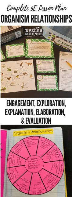 Organism Relationships Lesson Plan ready to print and teach the entire ecosystems unit. Includes word wall of vocabulary, interactive science notebook template, PowerPoint and note worksheet, and student choice final project. High School Activities, Middle School Science, Science Lessons, Science Resources, Life Science, Teaching Biology, Science Classroom, Ecology, Students
