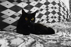 Cat, Pet, Animals, Fur, Black Cat