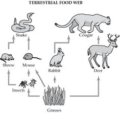 food chain coloring page - 1000 images about kyle 39 s animal board on pinterest wild
