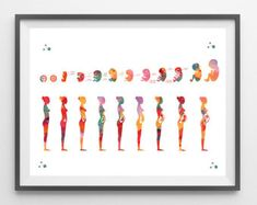Pregnancy stages Watercolor Print medical art fetal development poster fetus gestational age print gynecology midwifery print obstetrics