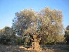 Hidden Crete - discover the secrets of the real Crete
