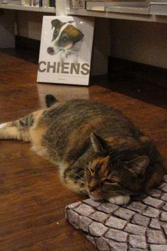 Le chat de la l'Orange Bleue... Venez découvrir le rayon jardinage à l'étage de la librairie...