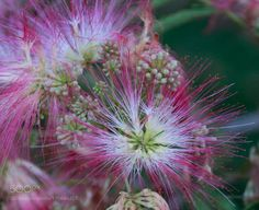 #nature Flowers bloom by jlhd001