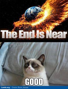 Grumpy Cat Grumpy cat best one yet. I love grumpy cat. dog faces That's my Grumpy Cat Grumpy Cat Quotes, Funny Grumpy Cat Memes, Funny Animal Memes, Cute Funny Animals, Cute Cats, Funny Cats, Funny Jokes, Hilarious, Fun Funny