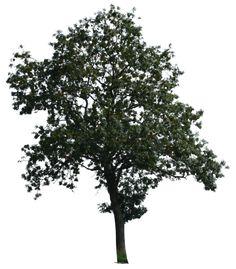 tree 15 a png by gd08.deviantart.com on @deviantART