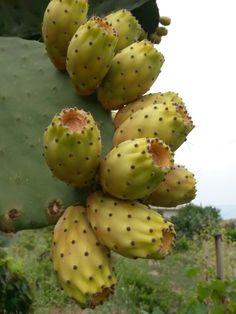 Fichi d' india tipicita' meridionale - mediterranean fruit