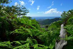 My next hike here on Oahu...Mt. Olympus...this weekend?