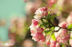 Gorgeous photo by Lisa Clarke of Polka Dot Cottage of what I believe are Cherry Blossoms. Perfect Spring Inspiration!