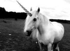 mystical magical unicorn