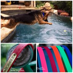 As you can see...Jax needs your no-stink collar. He swims about 4-5 times daily!!! Thanks Mandy for the photo:-)