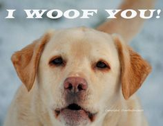 Animal Photography Labrador 8x10 Print by overthefenceart on Etsy