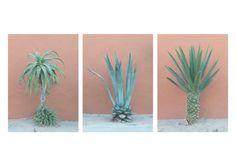 Set of three photographs Cactus by argiderphoto.