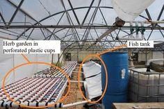 DIY aquaponic veggie & fish farm