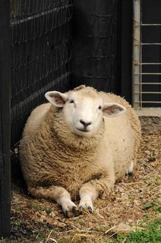 such a sweet and abiding lady ewe ...