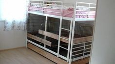 This is an excellent way of using the space underneath a bunk or loft bed to provide an  indoor setup for rabbits, including multiple levels using shelving. Description from pinterest.com.