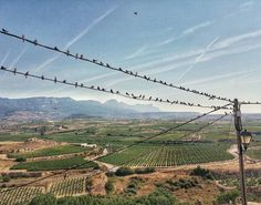 If you like fear we offer our special Rioja winetour The Birds... ;) #tourism #winetours #travel #wine #winelover #turismo #enoturismo #experience #winetastelovers #riojawine #gastronomía #visitSpain #vino #viaje #tapas #winetasting #instariojawine #gastronomy #instawinetours #winecountry #wineries #worldplaces #winetrip #winetravel #viajar #grapevines #winetourism #winetourist #lp