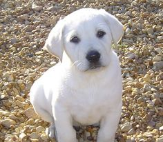 I'm going to believe that this is what my Cooper looked like as a pup...Didn't meet him until he was 2, so no baby pics.