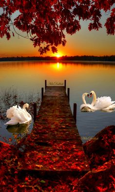 paisaje perfect picture is part of Beautiful nature wallpaper - Beautiful Nature Wallpaper, Beautiful Sunset, Beautiful Birds, Beautiful Landscapes, Beautiful World, Beautiful Places, Swan Wallpaper, Science And Nature, Nature Pictures
