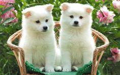 Paisajes De Amor | ... de pantallas de perros, todos los fondo de escritorio de perros gratis
