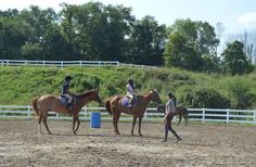 Our trained staff is always close by, especially during riding lessons, to give advice and tips for our Grier Summer girls. Riding Lessons, Cool Pets, Horseback Riding, Summer Girls, Advice, Horses, Tips, Animals, Animais