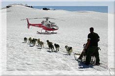 JNU-215 - Helicopter Dog Sledding on the Mendenhall Glacier
