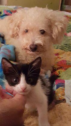 Cuddles got a new friend