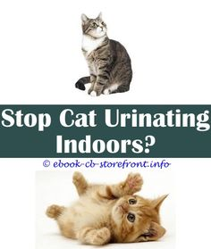 9 Incredible Useful Tips: Smarty Cat Training Spray what is cat spray and why do they do it.Will Cat Just Spray Elsewhere will baking soda kill cat spray.Diy Essential Oil Flea Spray For Cats.