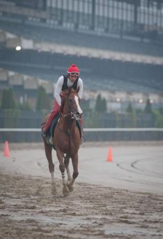 California Chrome trots through the mud at Belmont on Thursday.