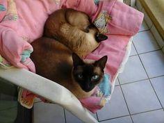 Belinha & Pacoca